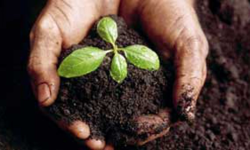 Our Soils – Our Future