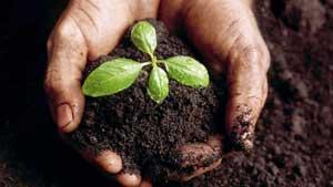 Our Soils – Our Future