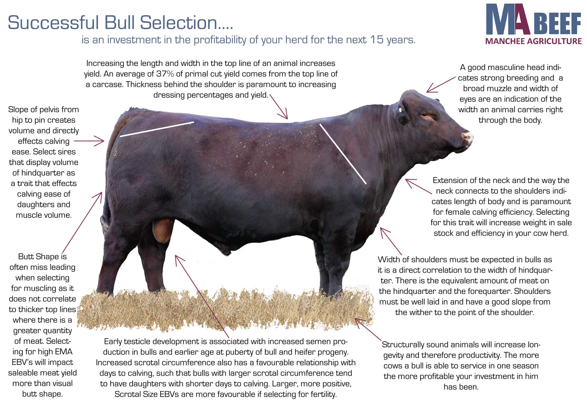 Successful Bull Selection