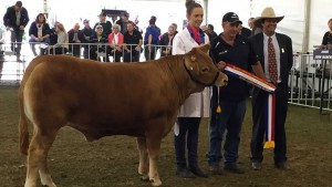 Adelaide Royal Steer Judging