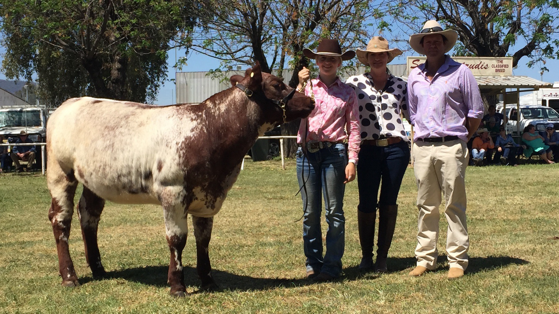 Shorthorn Youth Heifer Show