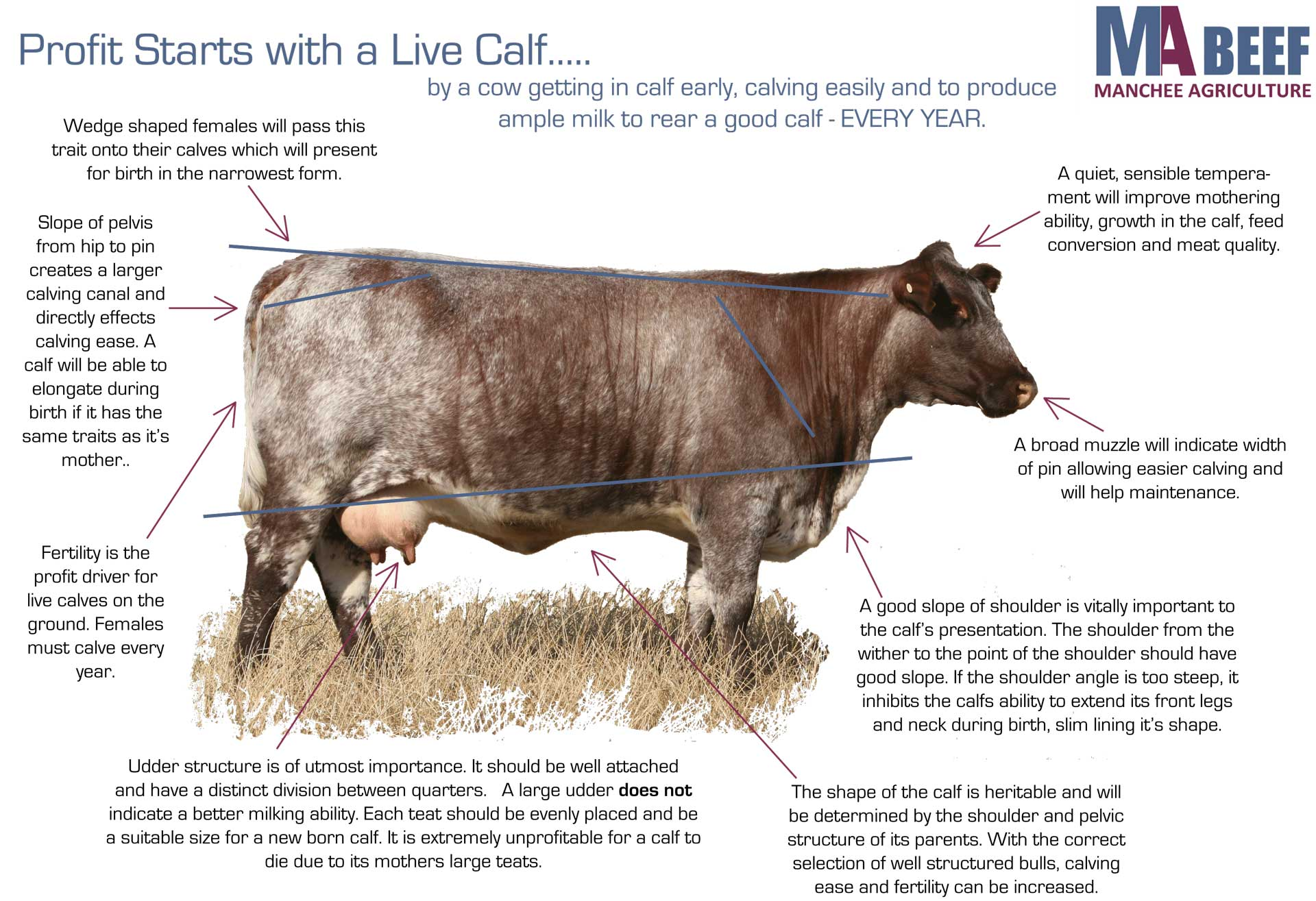 Profitability Starts with a Live Calf